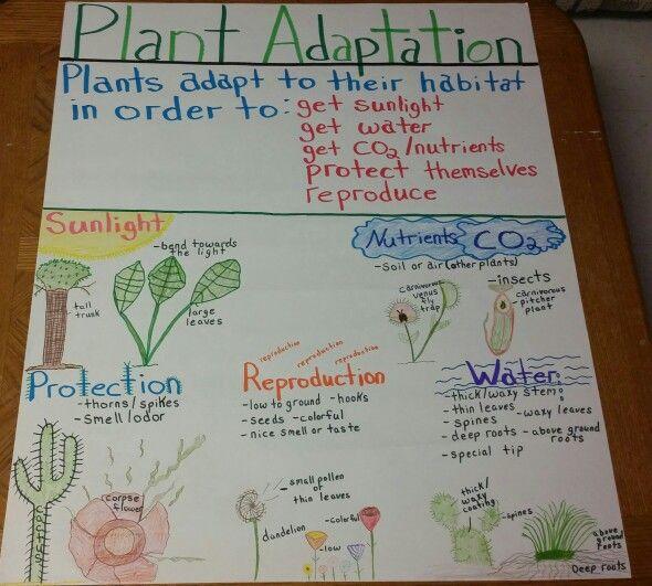 Plant Adaptations Anchor Chart