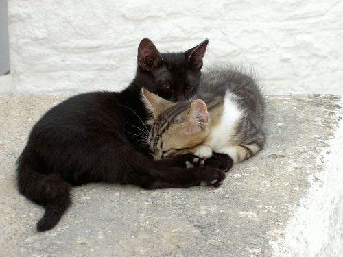 #Cats  Like,Repin,Share, Thanks!