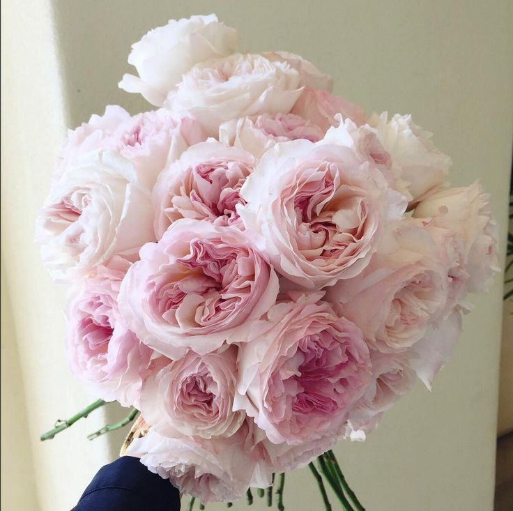 Roses In Garden: 197 Best Images About Pink Flowers On Pinterest