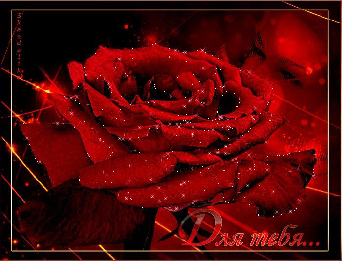 куски бережно розы красные мерцающие открытки предложил