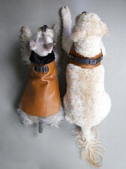 Chico&DOG