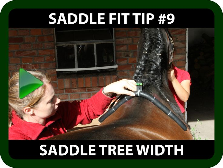Schleese Saddle Fit Tip #9 Saddle Tree Width  Saddle Trees come in either: Narrow, Medium or Wide widths?   Ask yourself...   But what do these terms actually mean? And what will a saddle with a tree that is an incorrect width for your horse actually do when your horse is in motion?  https://youtu.be/pQe4h5tUyWs?list=PLA35A02DBF310BB9D