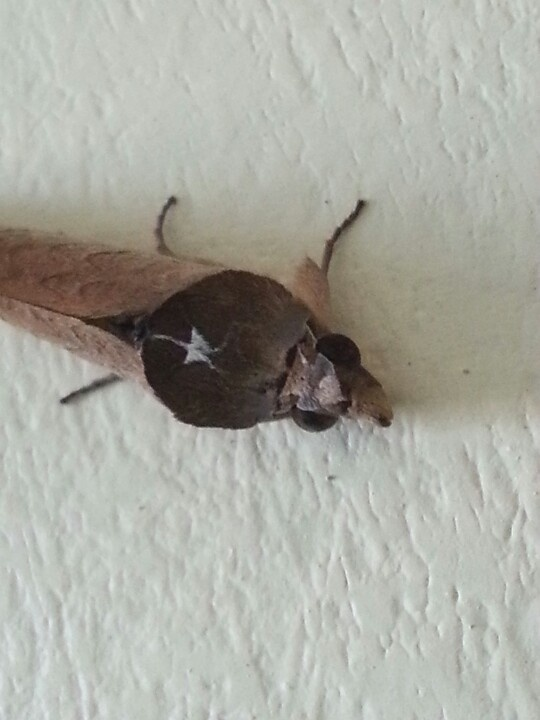 random insect
