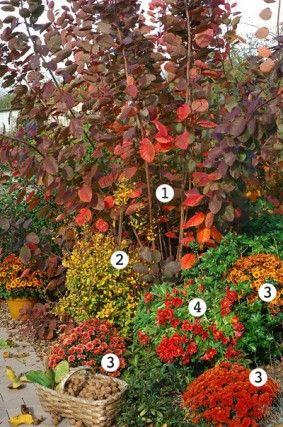 Cotinus, berbéris, alstroemères et chrysanthèmes<br />F. Marre - Globe Planter - Rustica
