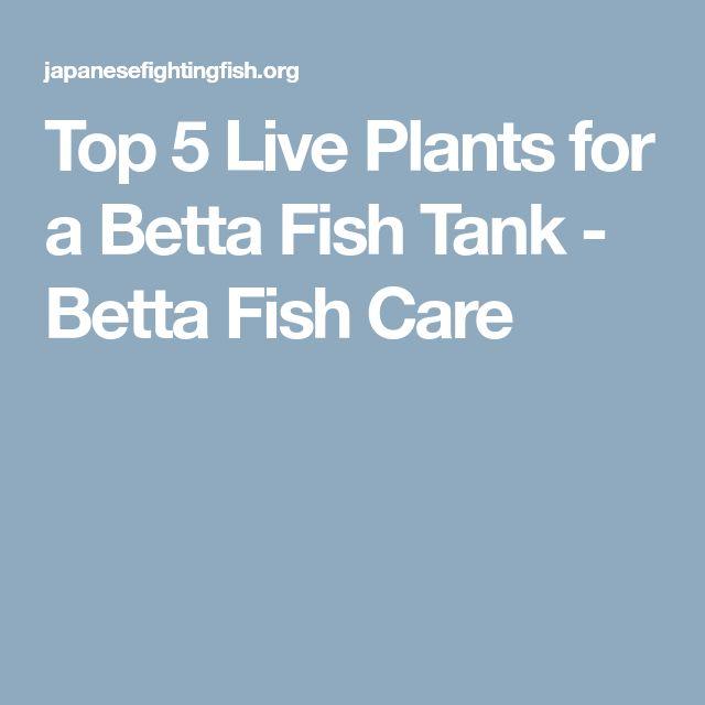 Top 5 Live Plants for a Betta Fish Tank - Betta Fish Care