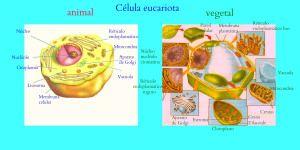 Las células procariotas y eucariotas
