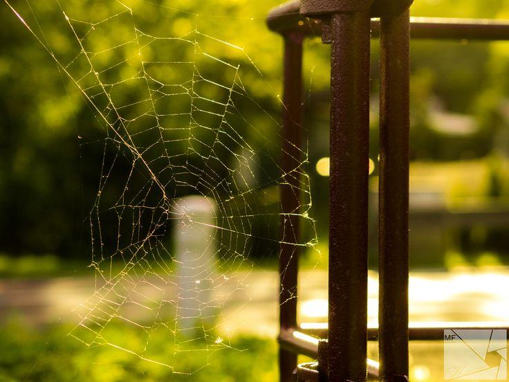 Web | by Munns Foto