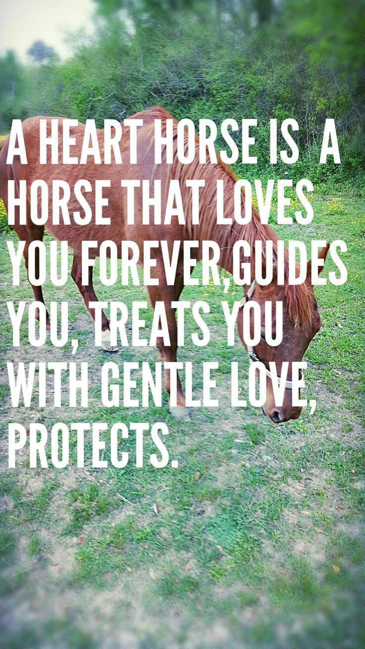 best images about horse quotes on pinterest cowgirl quote my