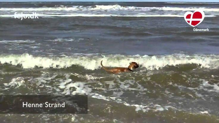 Über 1.000 Kilometer schönste Strände und viele Hundewälder - da lacht das Hundeherz und freut sich auf Sand, Wellen und stundenlange Spaziergänge!