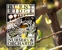 Burnt Ridge Nursery - you can order your trees and have them shipped to you