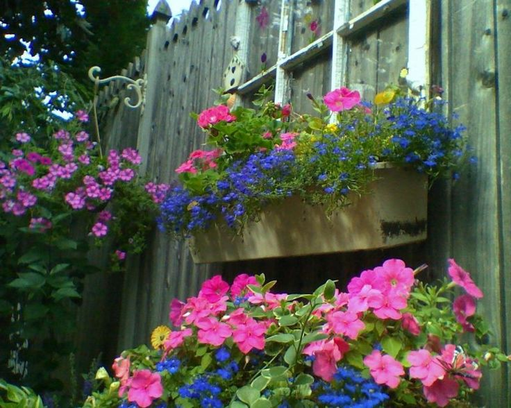 flower boxes for fences | ... mount it on your fence and add a window box. How can you not love it