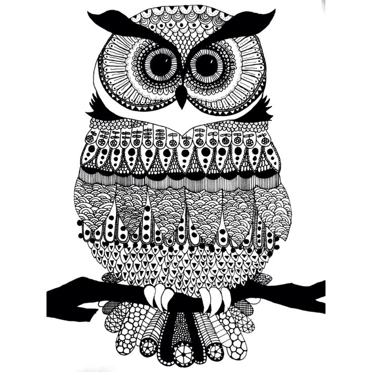 Zendoodle owl.