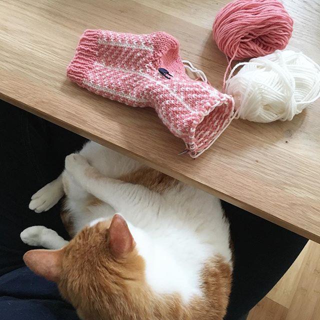 今年も準備した途端、ヒザに居座る小鉄さん。 #愛猫#cat#茶トラ白 #手編み#毛糸の靴下 #編み物