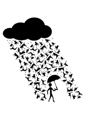 het regent honden en katten - Google zoeken
