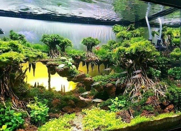 The Heaven Forest Aquarium 1