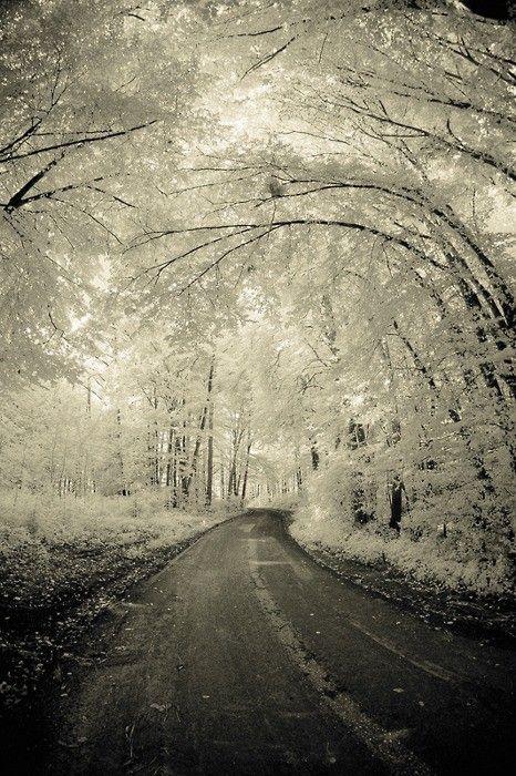 """When I saw this it made me randomly think of the poem """"Birches"""" by Robert Frost."""