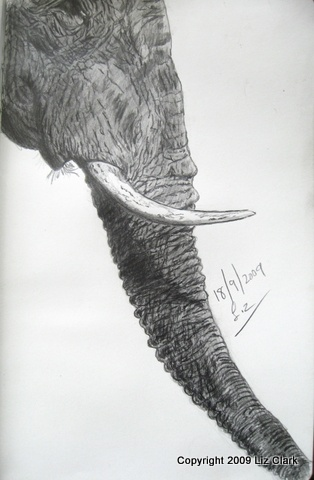 """#Elephants can grieve for their lost members. Titled """"Grieving for M40""""  Sketched from a Nat Geo image"""