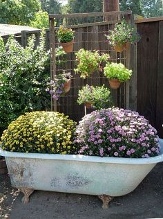 17 Best 1000 images about 2 Old bath tub in garden on Pinterest