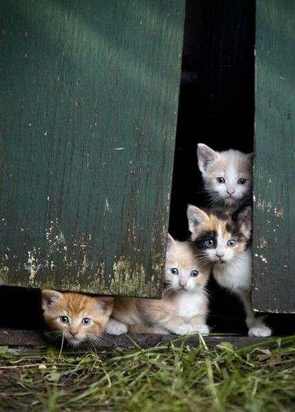 Babies in the barn, again! LOL  You keep saying you're gonna get that cat fixed but dang it, kittens are so sweet!