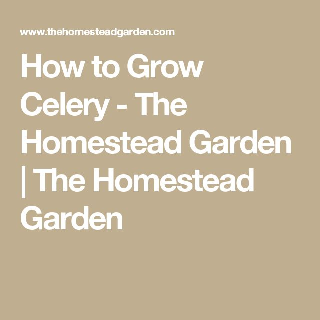 1000+ Ideas About Grow Celery On Pinterest