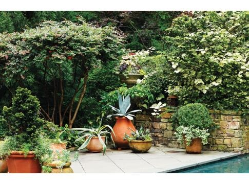 72 best Agave Urns images by Woodlawn Landscaping on ...