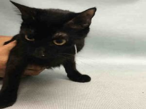 *** TO BE DESTROYED 09/13/16 *** A SECOND CHANCE FOR A YOUNG BEGINNER EBONY LADY…