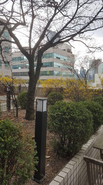 비가 내렸다 그쳤다를 반복하는 가운데 미팅을 위해 들른 사무실 테라스의 풍경이 역시 4월 봄의 시작을 알린다. Spring comes.