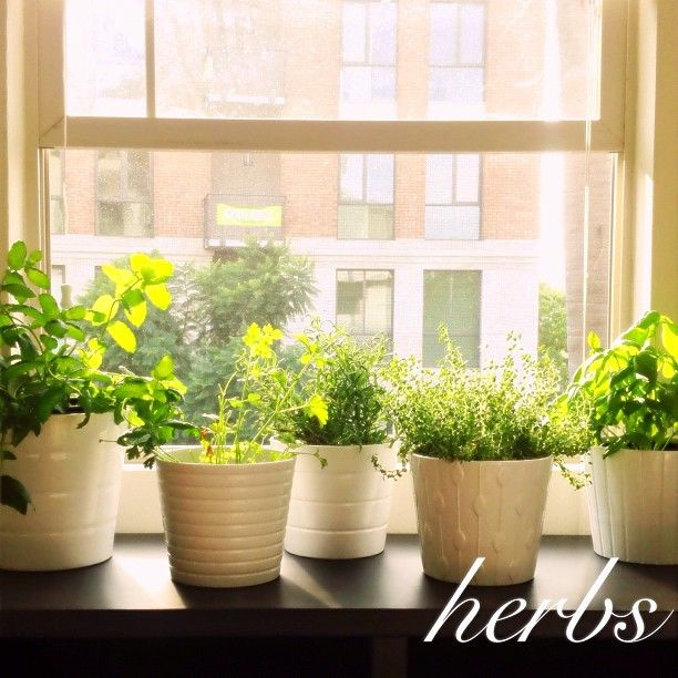 Apartment #garden #herbs #pots #window #city #sandiego