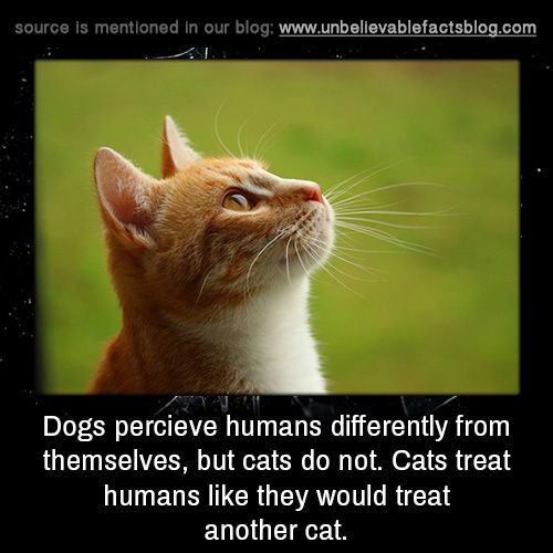 Dogs percieve humans differently from themselves, but cats do not. Cats treat humans like they would treat another cat.