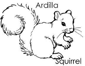 Animales Del Bosque Para Colorear Ardilla Squirrel Proyecto Las