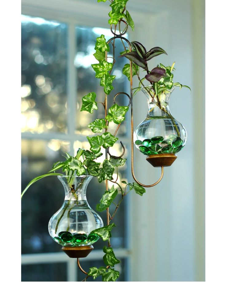 Beautiful live plants included.  Our Twin Hanging Water Garden™ (plant rooter) has a staggered yet balanced, elegant look. It's two-vase design allows plenty of room for a variety of plants to grow. It measures approximately 7 inches wide by 17 inches long and comes with a 14 inch long  extension hook. We include free live plants to get you started. Go ahead - add some colorful glass beads (as shown in the picture), or a brass butterfly, dragonfly or any of our decorative magnets, see…