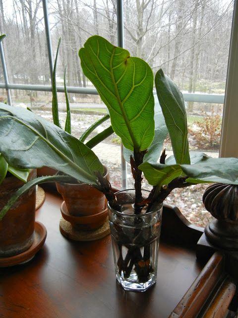55 besten pflanzen bilder auf pinterest zimmerpflanzen pflanzent pfe und landschaftsbau. Black Bedroom Furniture Sets. Home Design Ideas