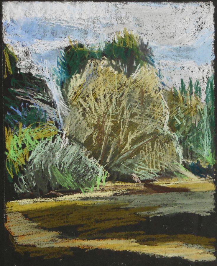 les saules sur l'Yonne