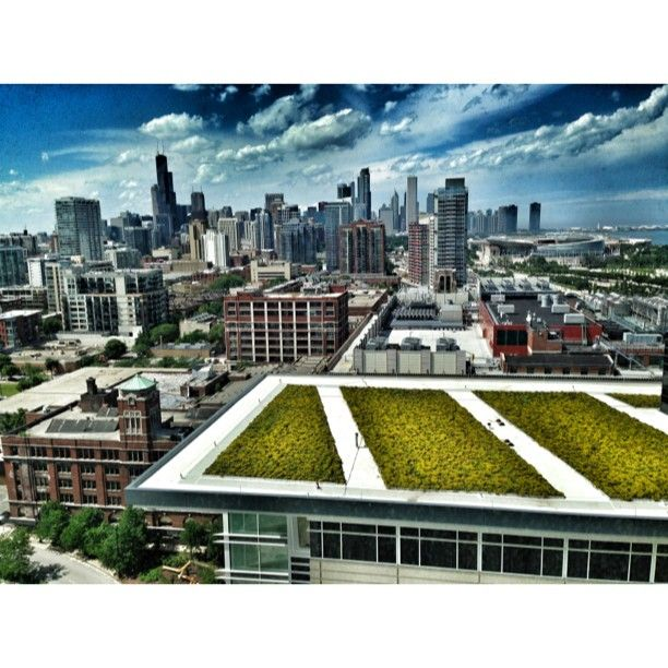 Beautiful Shot One Of Our Guests Took Of The Chicago Skyline And Our Green  Roof!