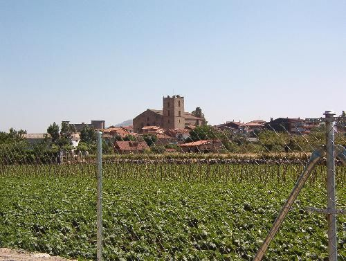 Ribera del Barco sembrada de Judías