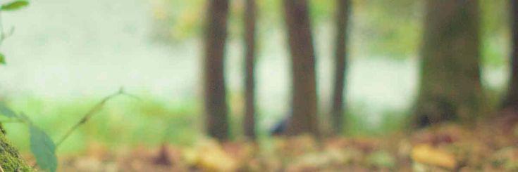 Le Kamishibaï de la nature, un outil de l'association Nature Vivante - Animateur-nature.com