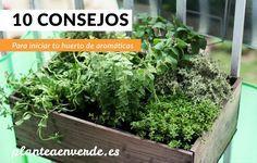 10 consejos para iniciar un huerto de plantas aromáticas