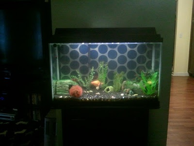 25 best ideas about fish tank decor on pinterest for Fish tank background ideas
