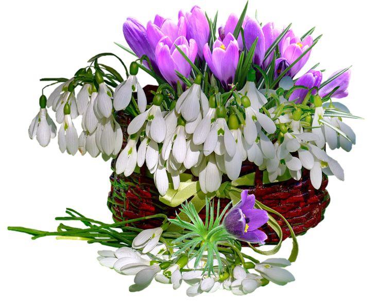 Поздравление, открытка с цветами весна