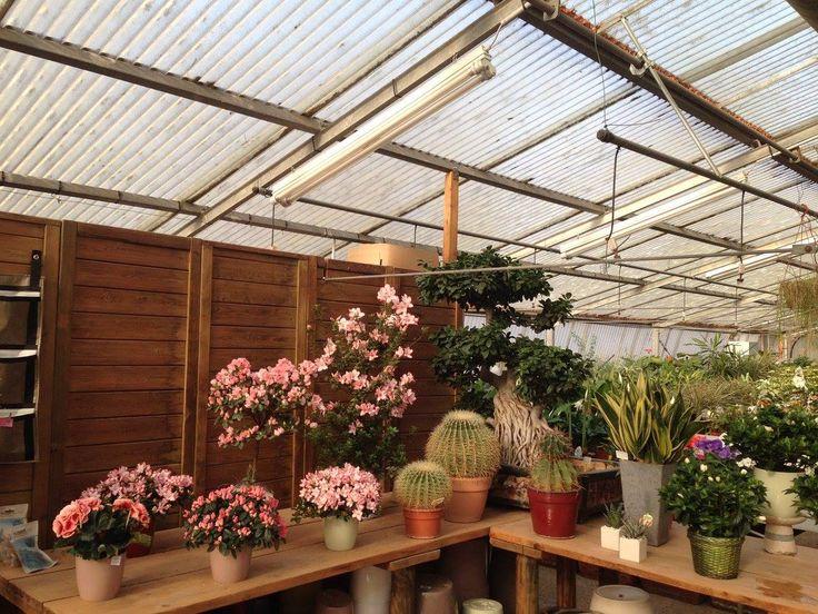 Vendita piante ornamentali per la casa – Vicenza – Creazzo, Altavilla Vicentina – Green Park