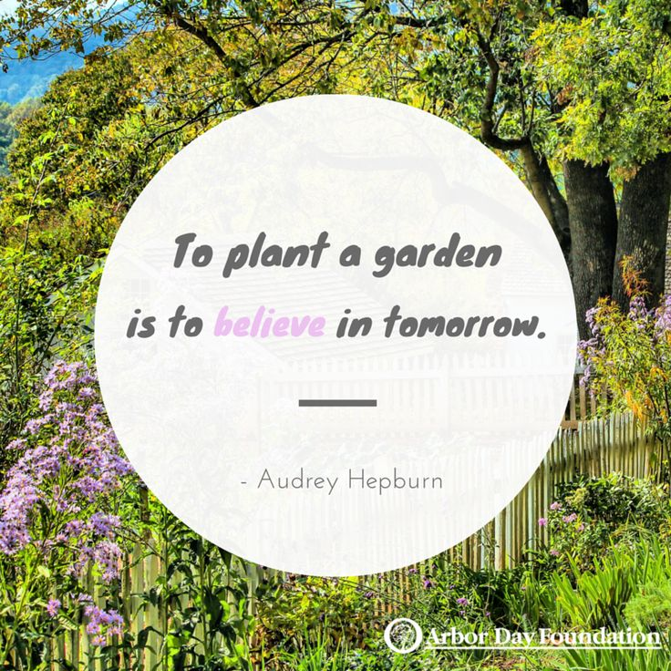 153 Best Tree Nature Quotes Images On Pinterest Nature Quotes Words And Hiking Quotes