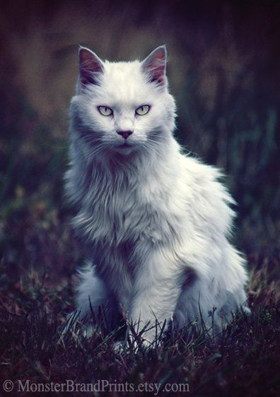 LOVE THIS!  Guardian Cat Photography Animal Fine Art by MonsterBrandPrints, $3.99