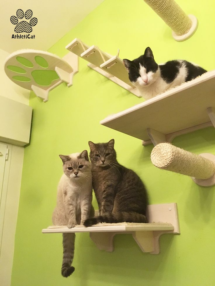 Valentina's #catgym for Ringo, Pippo and Miele
