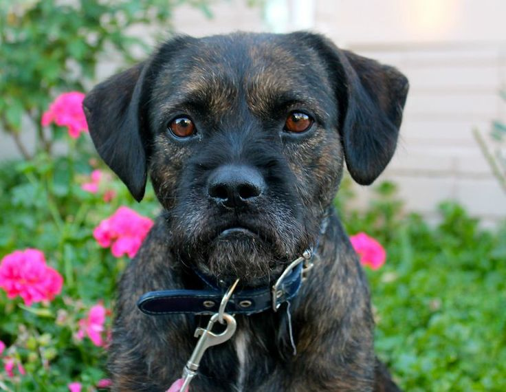Tabby aka adorable Angry Pup