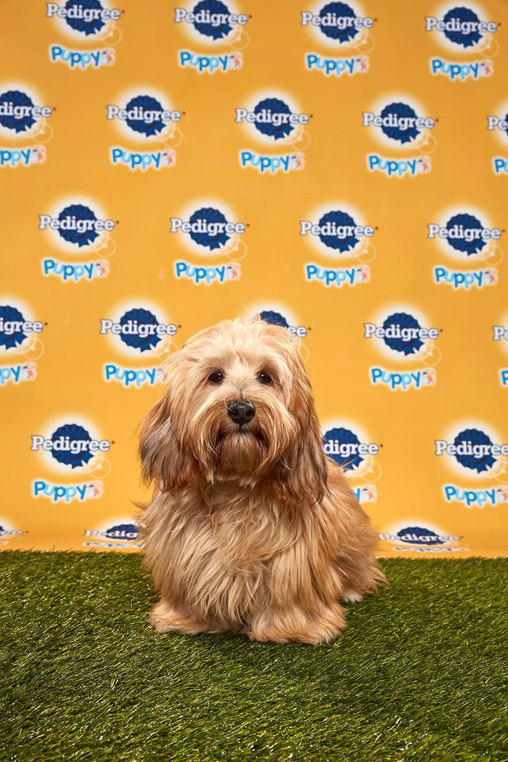 Puppy Bowl XVI Starting Lineup Puppy Bowl Animal