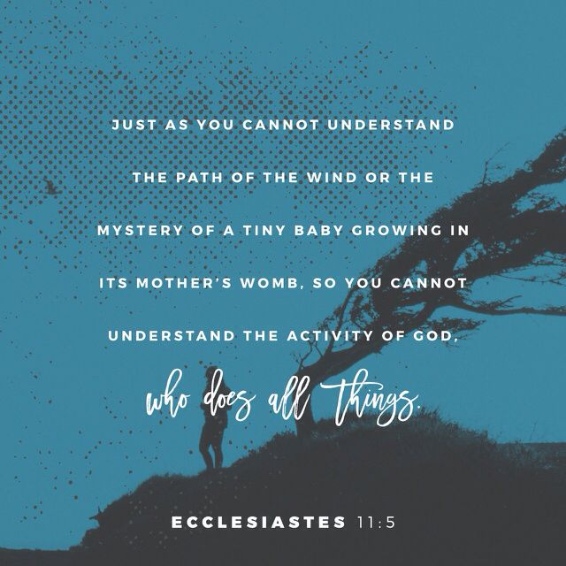 Just as you cannot understand the path of the wind or the mystery of a tiny baby growing in its mother's womb, so you cannot understand the activity of God, who does all things. Ecclesiastes 11:5