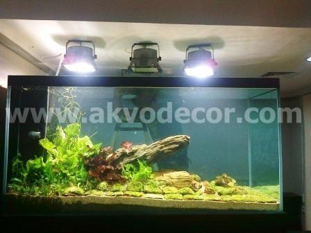 Aquarium air tawar design akvodecor