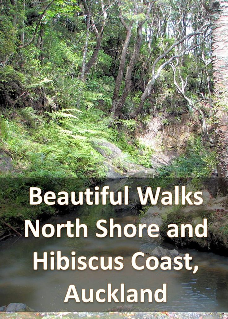 Lots of wonderful walks and cycleways around the North Shore and Hibiscus Coast of Auckland