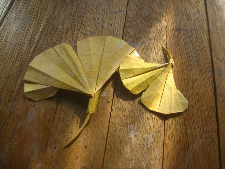 Ginkgo leaf designed by Peter Engel | by Alphonsus Rouis