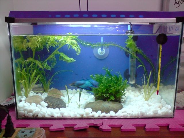 15 best good fish care images on pinterest fish for Fish tank ice method